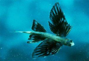10 Ikan Tercepat di Lautan