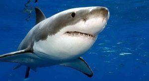 10 ikan paling mematikan di dunia