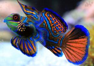 10 Ikan Tercantik di Dunia
