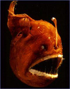 5 Ikan Terbuas dan Menakutkan